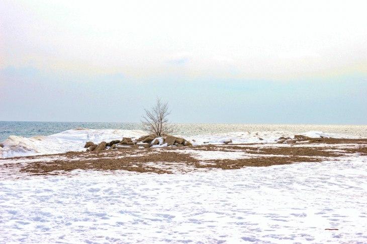 """Winter Isolation"" by Carol Harrison"